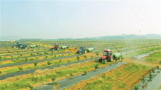 亚洲城游戏娱乐官网亚洲城888邀您参加第三届广西柑橘产业发展高峰论坛(图文)